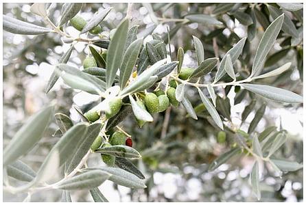 close-up photography of green frutis