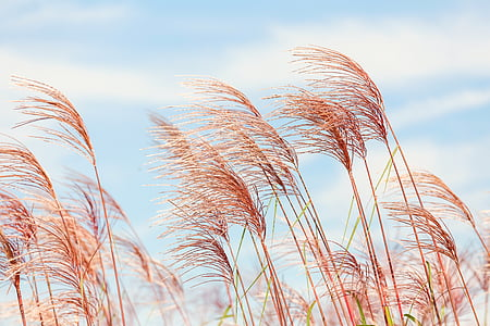 low angle photography of brown grass