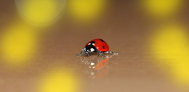 close up photo of ladybug