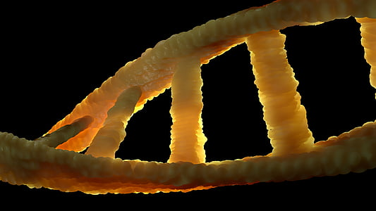 macro photography of DNA
