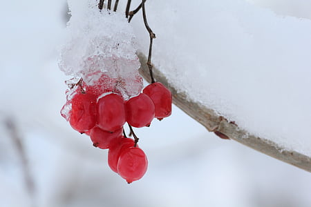 frozen cherries on brang