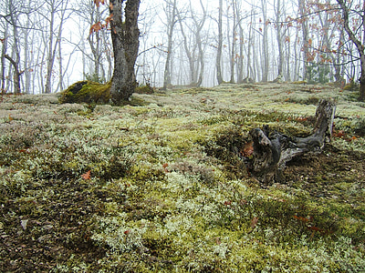 moss under leafless trees