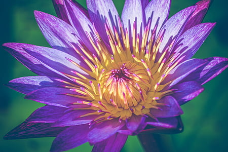 close up photography of purple and yellow petaled flower