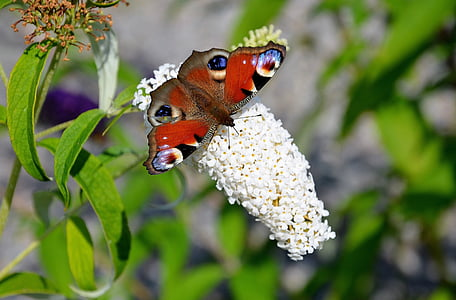selective focus photography of red butterfly on flower buds