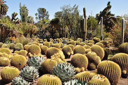 barrel cactus plants