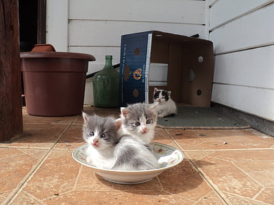two white-and-gray kittens in bowl