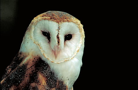 selective photography of beige and brown barn owl