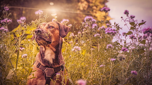 short-coated brown and black dog sitting on purple petaled flower field during daytime