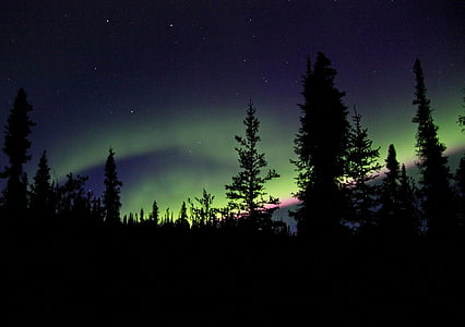 silhouette of forest above aurora