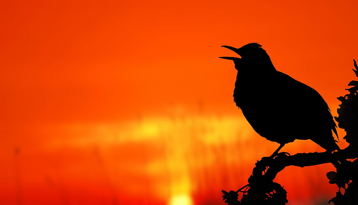 silhouette of passerine bird perched on tree