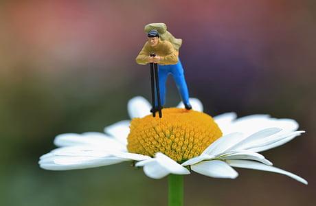 macro photograph of hiker figurine on white petaled flower