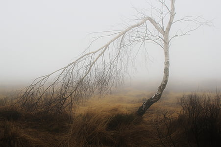 bare tree at the field during day and fog