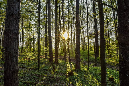 sun rays in forest landscape photograpy