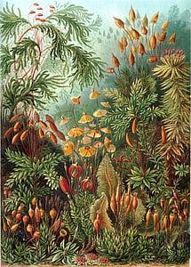 assorted plants paintin