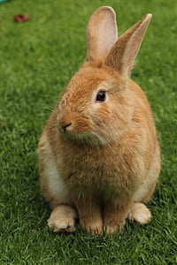 brown bunny on green grass during daytime