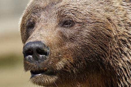 selective focus photography of brown bear