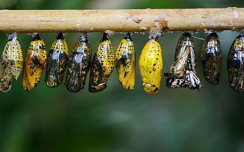 assorted-color butterfly cocoons