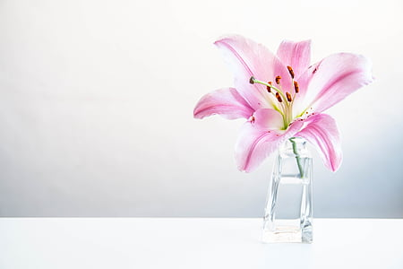 pink lily in clear glass vase