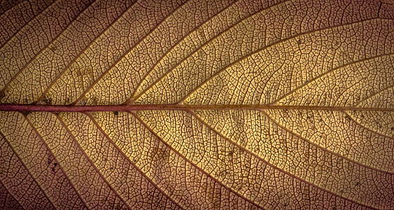 macro shot photo of brown leaf