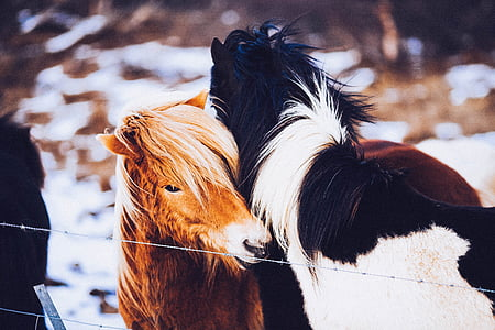 two horse hugging beside wires