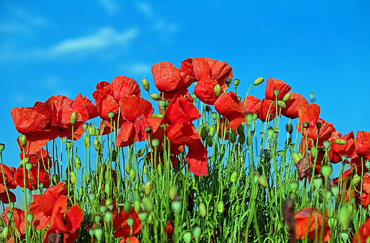 photography of red petaled flowers