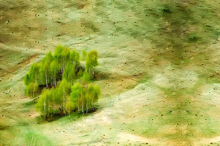 green and beige forest painting