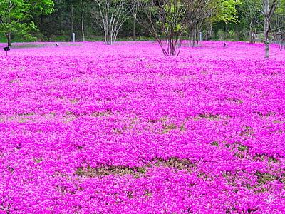 bed of purple petaled flower near trees