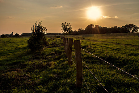 grass field with grey wire fence