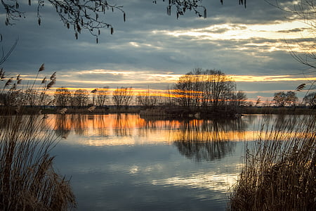 reflective focus silhouette photography of bare trees near body of water