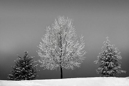 three white and black trees