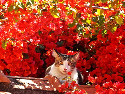 white and brown cat near red petaled flowers during daytime photo