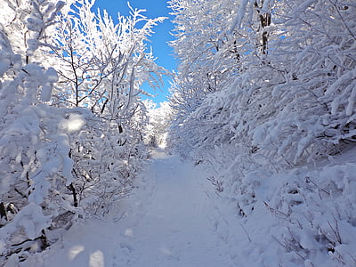 snow-covered pathway during daytime