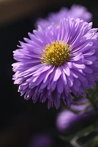 Photography Of Pink Flower 3168x4752 Selective Focus Purple Zinnia
