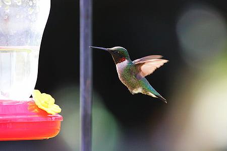 selective focus photography of hummingbird