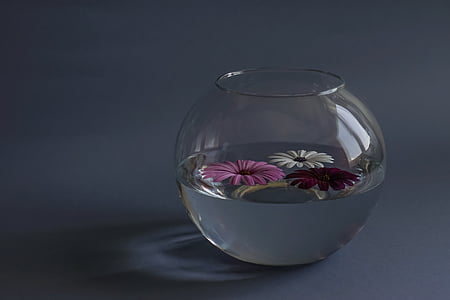 filled clear glass fish bowl