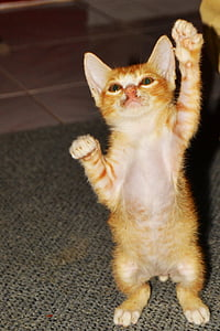 short-furred orange kitten on gray textile