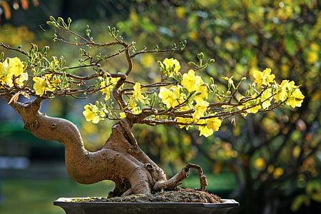 yellow flowering bonsai tree close up photo