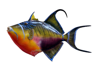 multicolored fish with white background