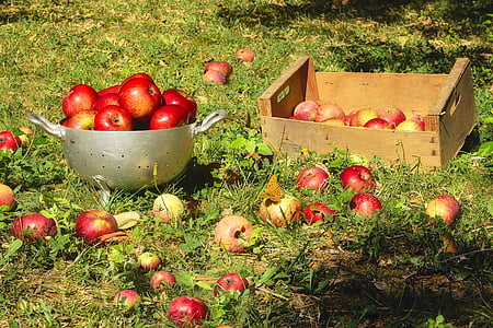 red apples on tray during daytime