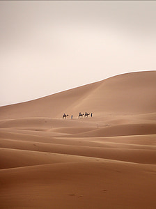 three person riding on camel beside man walking on sand