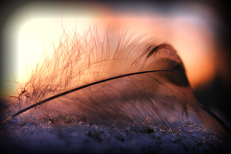 closeup photo of feather