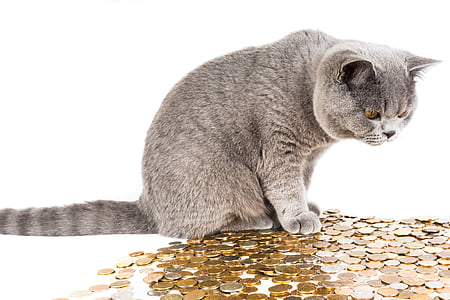 gray tabby cat on on coins