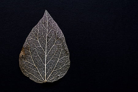 close-up of grey leaf against black background