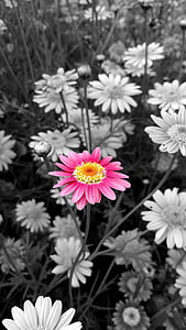 selective color of pink petaled flower