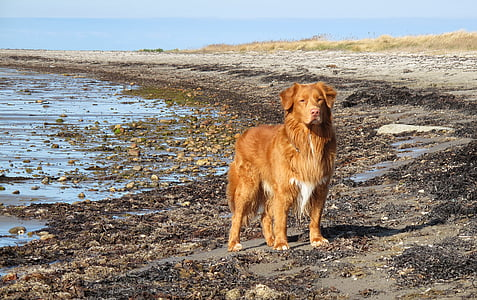 dog standing near to body of water
