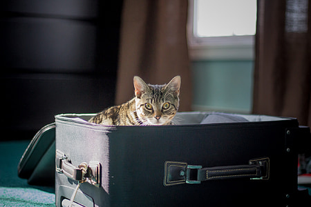 brown tabby cat on suitcase