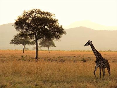 giraffe near to tree