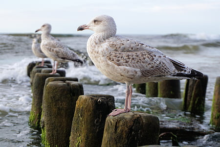 three seagulls on wood posts surrounded by ocean during daytime