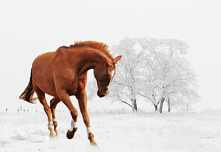 photo of galloping brown horse with white tree as background