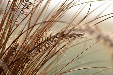 macro shot photography of brown mill